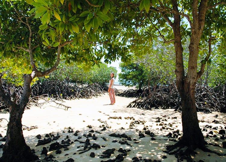 Walking through the mangroves at Mangrove Beach in Nusa Lembongan