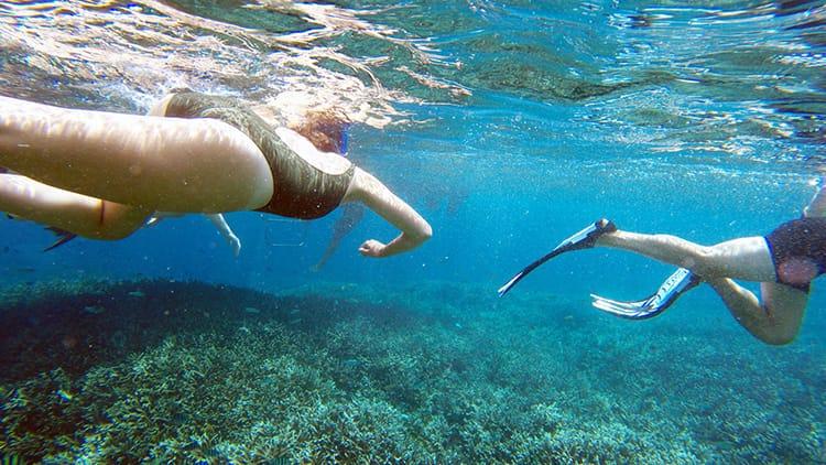 An underwater view of people swimming while snorkeling in Nusa Lembongan