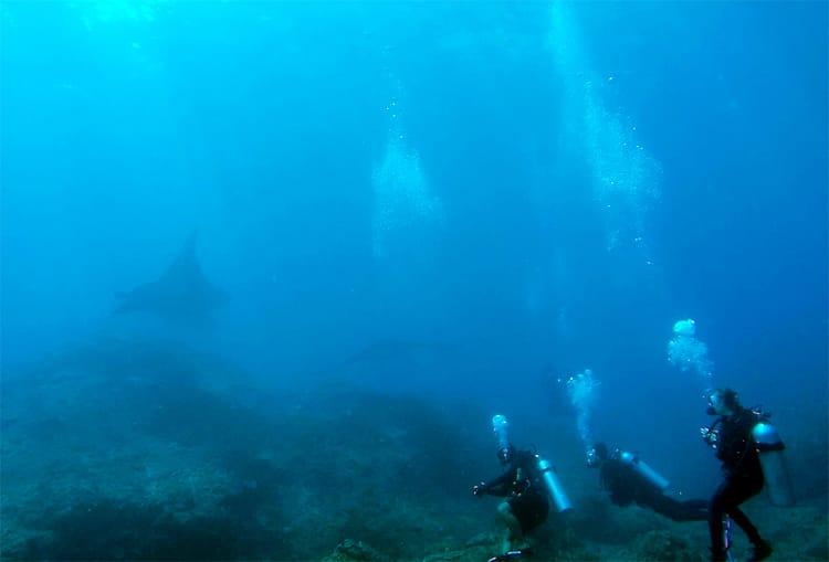 Three divers watch manta rays in Bali