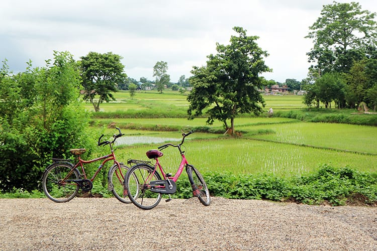 Two rented bicycles stand alongside the bright green rice paddies in Chitwan