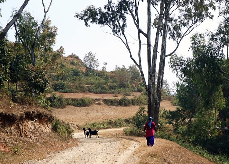 A woman takes her goats to graze along the quiet dirt road