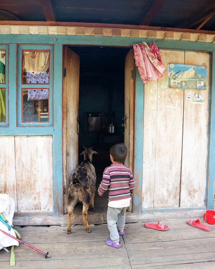 A boy and his goat sneak a peak in the kitchen of the teahouse in Dongang