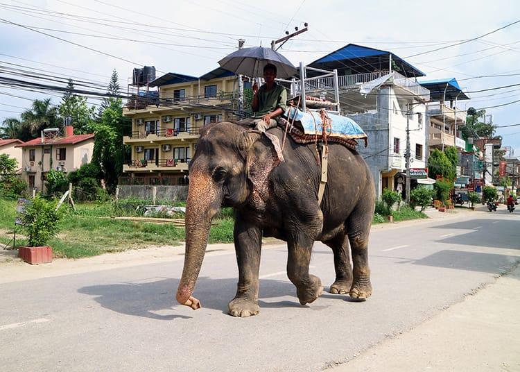 Elephant Safari in Chitwan National Park