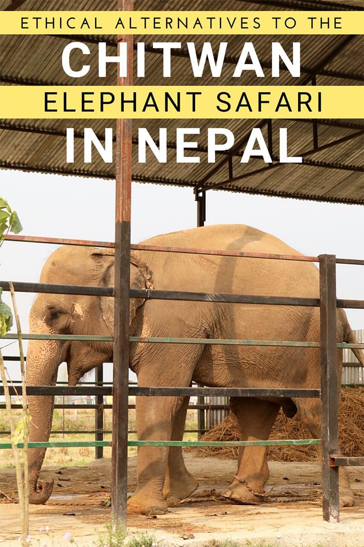 An Ethical Alternative to the Elephant Safari in Chitwan | Full Time Explorer | Chitwan National Park | Jungle Safari | Asian Elephants | Responsible Tourism | Sustainable Tourism | Ethical Tourism | Stand Up 4 Elephants | Tiger Tops | Riding Elephants | Nepal Tourism | Travel #nepal #chitwan #nationalpark #junglesafari #elephantride #responsibletourism