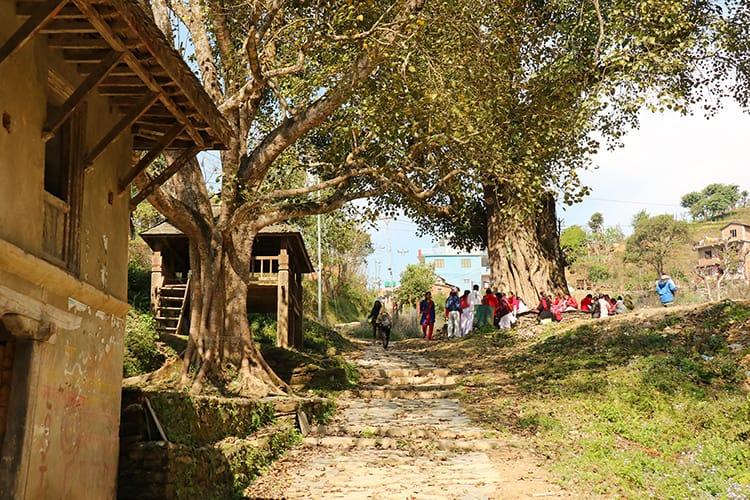 Children sit under a large Chautari tree on a school field trip