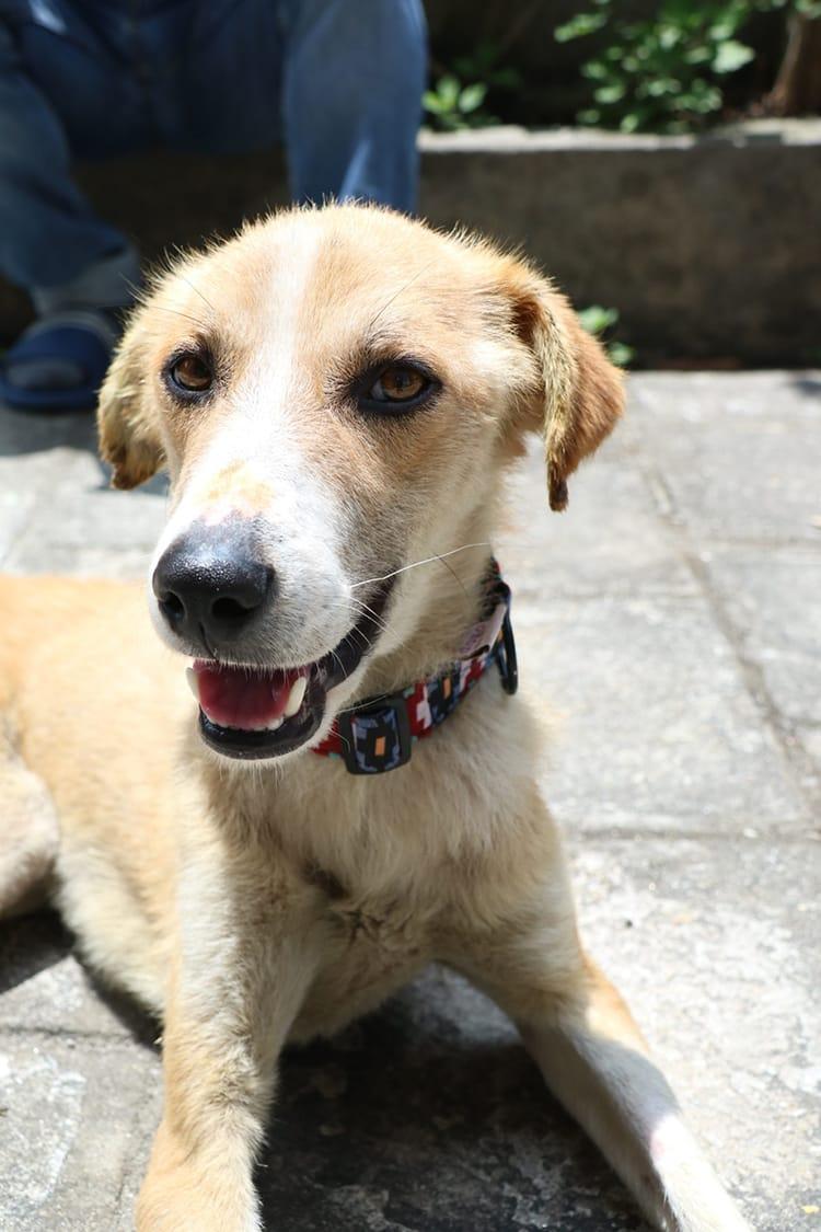 Don't Panic Nepali Dogs Dot