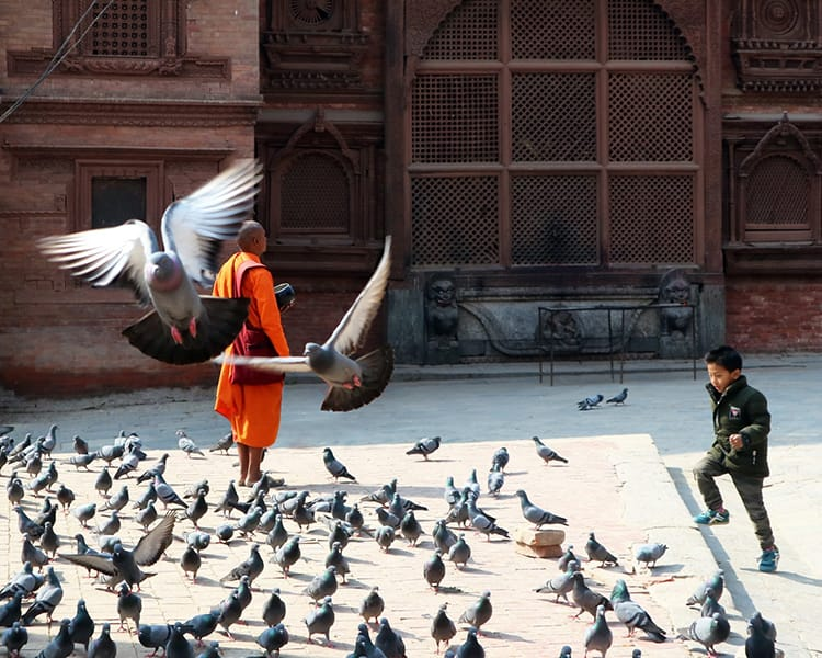 Monk Standing in Kathmandu Durbar Square in Nepal with Pigeons Flying By