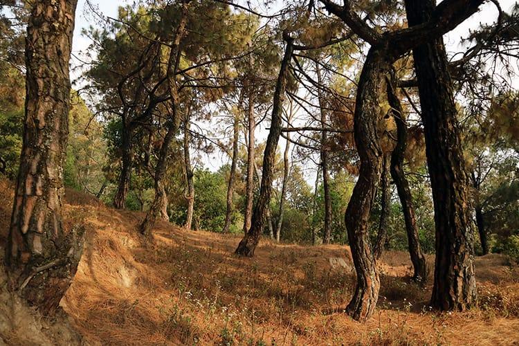 A small hiking trail in Shivapuri National Park in Kathmandu
