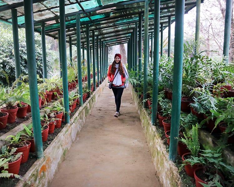 Michelle Della Giovanna from Full Time Explorer walks through the fern garden in Godawari Botanical Garden
