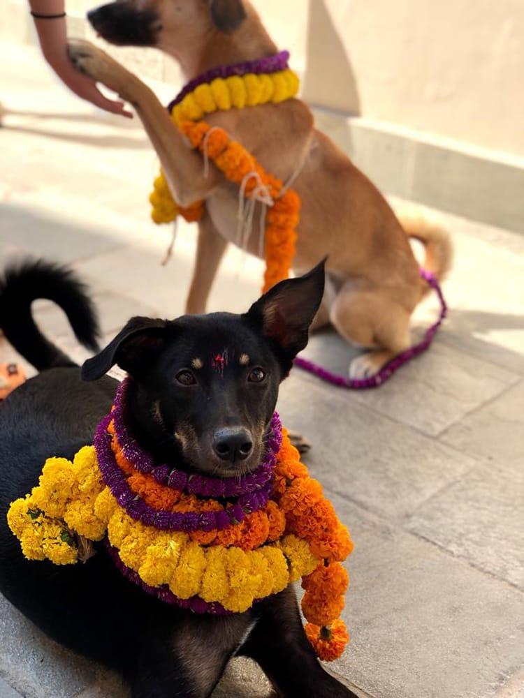 Two rescue dogs wear mandala during Kukur Tihar