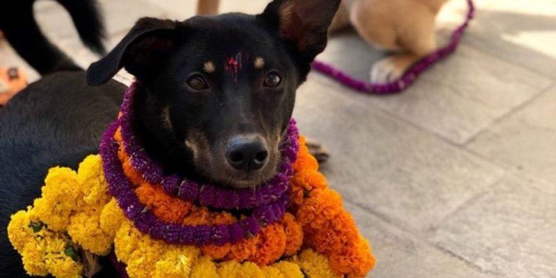 Kukur Tihar Dog Festival in Nepal