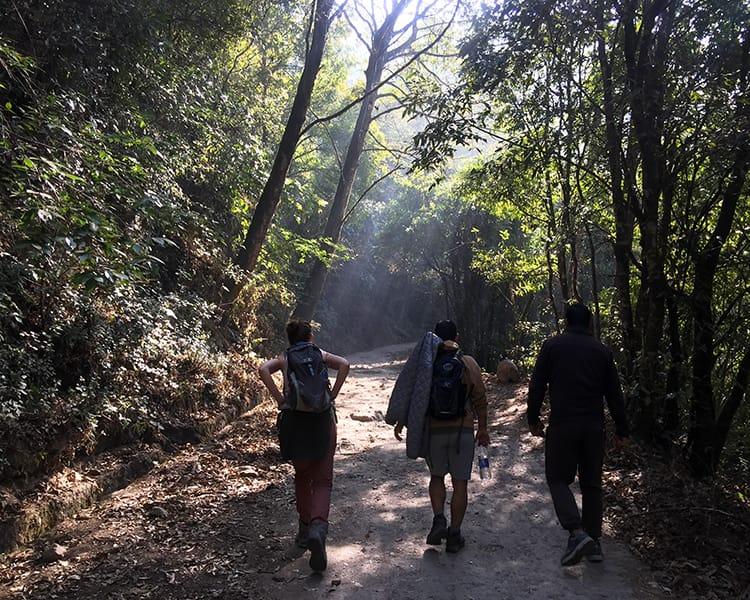 Three hikers walk through the woods in Shivapuri National Park