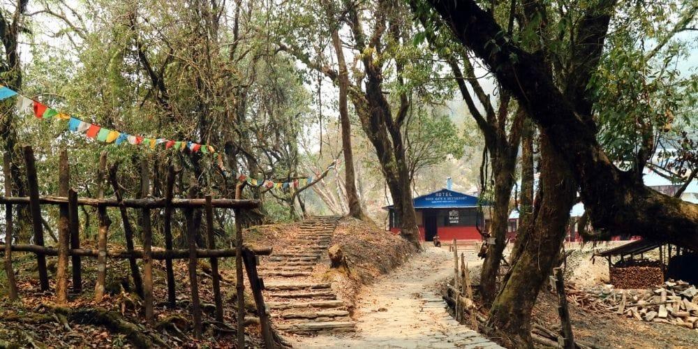 Forest Camp Mardi Himal Trek Nepal Village Trekking Guide