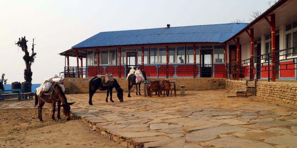 Mardi Himal Low Camp Nepal Village Trekking Guide Feature