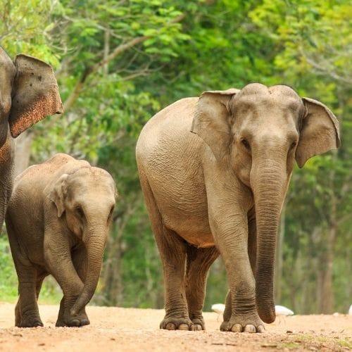 mondulkiri elephant reserve